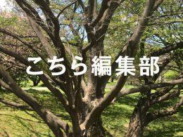 東京都知事選における「異常な事態」(西村リユ)